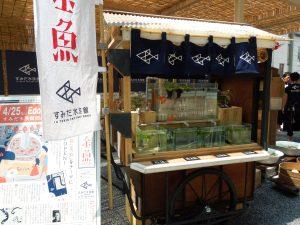 すみだ水族館が江戸NORENにやってくる!